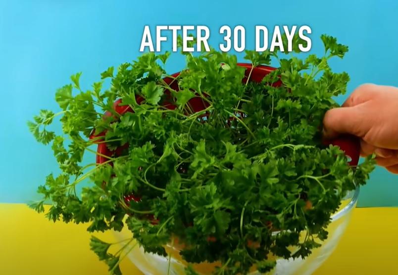 לגדל בבית צמחים